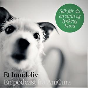 Et hundeliv – slik får du en sunn og lykkelig hund